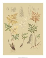 Nature's Lace I Giclee
