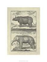 Elephant Rhino Giclee
