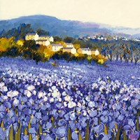 Champs D'iris, Provence Fine-Art Print