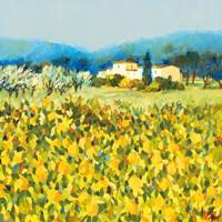 Lemon Grove, Tuscany Fine-Art Print