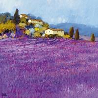 Wild Lavender, Provence Fine-Art Print