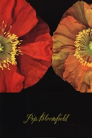 Red And Yellow Poppy I Fine-Art Print
