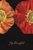 Red And Yellow Poppy II Fine-Art Print