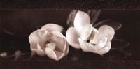 Soft Magnolias I Fine-Art Print