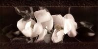 Soft Magnolias II Fine-Art Print