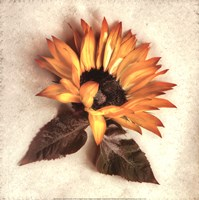 Sand Sunflower Fine-Art Print