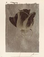 Silver Stem II Fine-Art Print