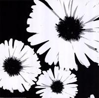 Bw Daisies II Fine-Art Print