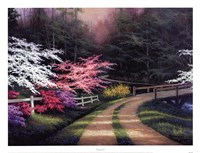 Dogwood Road Framed Print
