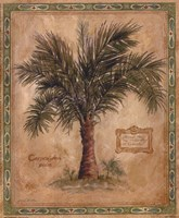 Palm Carpoxylon Fine-Art Print