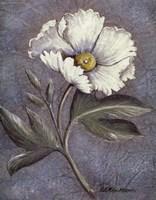 White Poppy Fine-Art Print