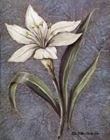 White Lilly Fine-Art Print