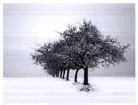 Winter Tree Line I Fine-Art Print