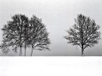 Winter Tree Line II Fine-Art Print
