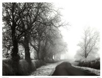 Misty Tree-Lined Road Framed Print