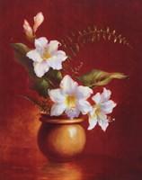 Amaryllis Fine-Art Print