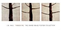 Timberline Fine-Art Print