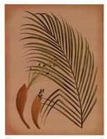 Palm Frond IV Fine-Art Print