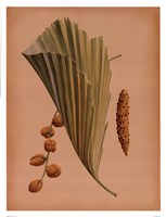 Palm Frond III Fine-Art Print