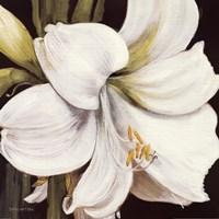White Amaryllis Fine-Art Print