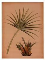 Palm Frond I Fine-Art Print