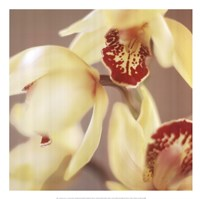Cymbidium Flow II Fine-Art Print