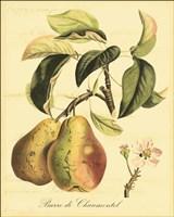 Petite Tuscan Fruits IV Framed Print
