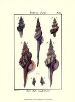 Sea Shells I Fine-Art Print