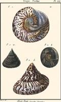 Sea Shells II Fine-Art Print