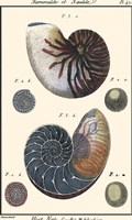 Sea Shells VI Fine-Art Print