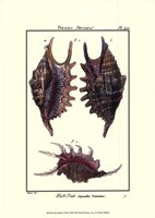 Sea Shells VIII Fine-Art Print