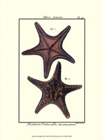 Sea Shells XII Fine-Art Print