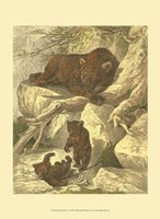 Small Brown Bear Fine-Art Print