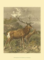 Small Red Deer Fine-Art Print