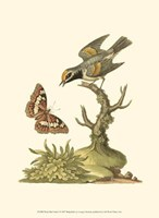 Petite Bird Study I Fine-Art Print