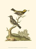Petite Bird Study II Fine-Art Print