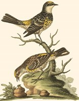Petite Bird Study III Fine-Art Print