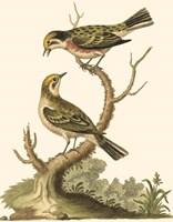 Petite Bird Study IV Fine-Art Print