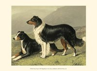 Sheep Dogs Fine-Art Print