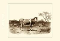 Bovine I Fine-Art Print