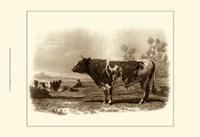 Bovine III Fine-Art Print