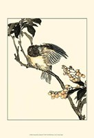 Oriental Bird On Branch V Fine-Art Print