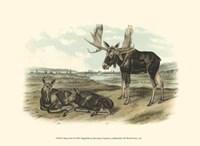 Moose Deer Fine-Art Print