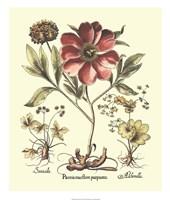 Framboise Floral I Giclee