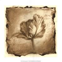 Floral Impression V Giclee
