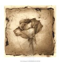 Floral Impression VI Giclee