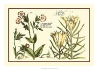 Garden Botanica III Giclee