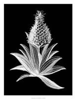 Pineapple Noir I Giclee