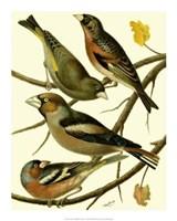 Domestic Bird Family II Giclee