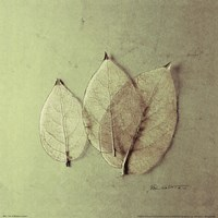 Trio of Skelton Leaves Fine-Art Print
